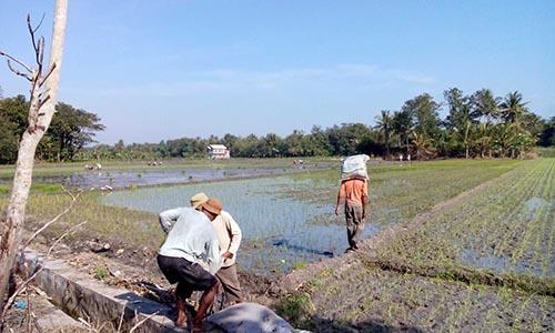 Langkah Persiapan Pendirian Badan Usaha Milik Desa