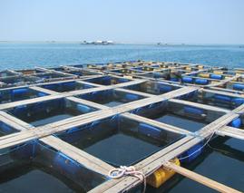 Pemberdayaan Nelayan Kerapu
